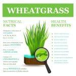 wheat-grass_new