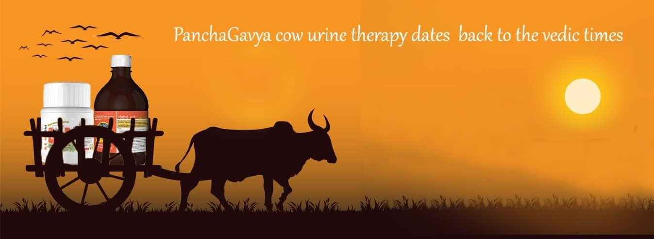 Panchagavya cow products online